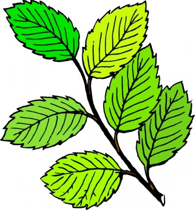 summer-leaves-clip-art