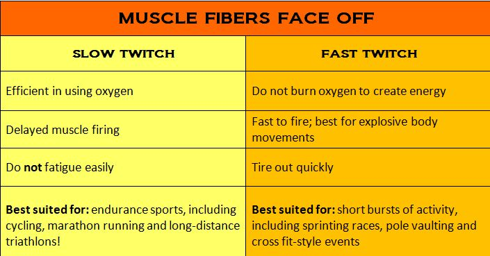 slow oxidative muscle fibres Looking for online definition of slow-twitch fiber in the medical dictionary slow-twitch fiber explanation free  serving the fiber muscle the muscle also .